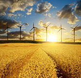 Golden wheat field with wind turbines Stock Photos