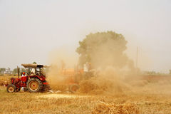 Golden wheat Harvest and chaff seperation India. Golden wheat harvesting, shredding and chaffing season in Punjab, Granary of India Royalty Free Stock Photos