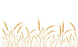 Golden wheat isolated on white background. Set of wheat ears. Background for farms and bakeries. Collection of elements for company logos, print products, page Stock Photo