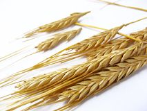 Golden wheat stalks Stock Photos