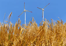 Golden wheat with wind turbine Stock Photo