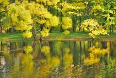 Golden willows Stock Photos