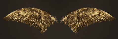 Golden wings. Two golden wings isolated on dark background Stock Image