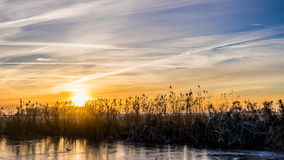 Golden winter sun on snowy paddock behind reed. 
