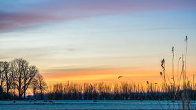 Golden winter sun on snowy paddock frozen trees. And beautiful sky with warm colors and fluffy clouds Stock Photo