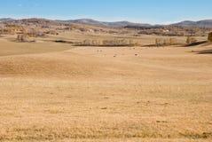 Golden woods on grassland under blue sky Stock Photo