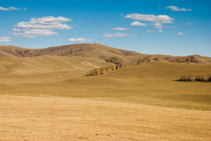 Golden woods on grassland under blue sky Royalty Free Stock Photo