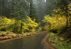 Golden Yellow Autumn Rainy Forest Road Royalty Free Stock Image