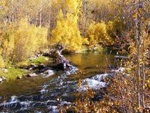GOLDEN YELLOW AUTUMN TREES NEXT TO THE RIVER Stock Photos
