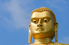 Golden yellow Buddha head Royalty Free Stock Images