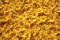 Golden yellow flowers background royalty free stock images