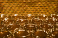 Golden yellow honey in glass jar on wooden board Closeup Copy space comp frame empty textspace Stock Images