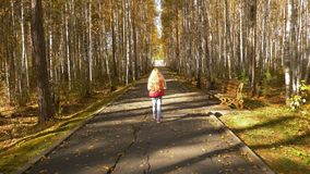 Golden yellow leaves fall from trees. Girl walking through yellow alley. Golden yellow leaves fall from trees. Girl walking through yellow alley in park at fall stock footage