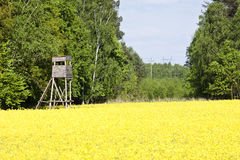 Golden yellow rape field Stock Photography