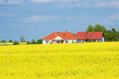 Golden yellow rape field Stock Images