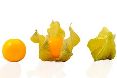 Goldenberry Stages. View of the stages of a goldenberry from enclosed to opened Stock Photo