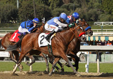 Goldencents Wins The 2013 Sham Stakes Stock Image