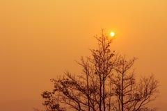 Goldene Abend-Landschaft Lizenzfreies Stockfoto