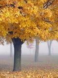 Goldene Ahornholz-Bäume im Nebel Lizenzfreie Stockfotografie
