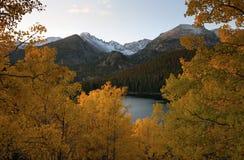 Goldene Aspen-Bäume Stockbild