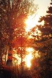 Goldene Bäume Stockfotos
