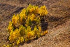 Goldene Bäume Stockfotografie