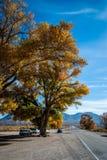 Goldene Bäume Lizenzfreie Stockfotos