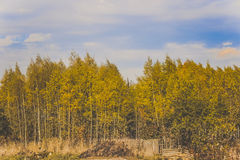 Goldene Bäume im Wald Lizenzfreie Stockbilder