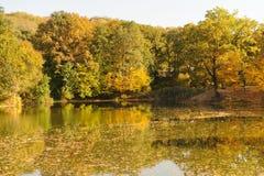 Goldene Bäume und See Lizenzfreie Stockfotos