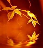 Goldene Blätter Stockfotografie