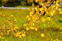 Goldene Blätter Stockfoto