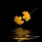 Goldene Blätter Stockfotos