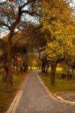 Goldene Blätter auf Niederlassung, Spätholz mit Sonne strahlt aus Stockbild