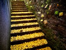 Goldene Blätter auf Treppe Stockfotos