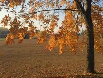 Goldene Blätter des Herbstes Stockfotografie