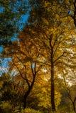 Goldene Blätter im See stockfotos