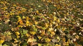 Goldene Blätter und Gras Lizenzfreie Stockfotografie