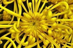 Goldene Blume stockbilder