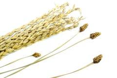 Goldene Blume auf hölzernen Hintergründen Stockfotografie