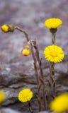 Goldene Blumen Lizenzfreies Stockfoto
