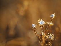 Goldene Blumen Stockfoto