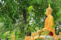 Goldene Buddha-Statue im tropischen Garten Lizenzfreies Stockfoto