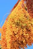 Goldene Daten - Nahrung von der Wüste, damit alle genießen Stockfoto