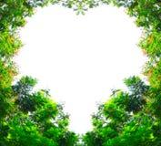 Goldene Duschbäume in der Herzform Lizenzfreies Stockfoto