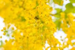Goldene Dusche Stockbild