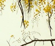 Goldene Dusche-Baum auf Büttenpapier Stockfoto