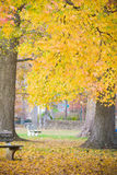Goldene Fall-Blätter im Park Lizenzfreie Stockfotos