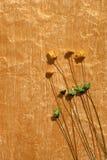 Goldene Farbe gemaltes Papier und getrocknete Blumen Stockfoto
