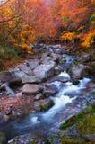 Goldene Farben des Waldes und des Stromes Stockfotografie