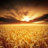 Goldene Felder Lizenzfreie Stockfotos